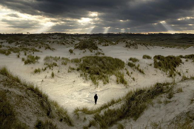 Dunes at De Westhoek Nature Reserve, Flanders. Michiel Hendryckx/Wikimedia Commons