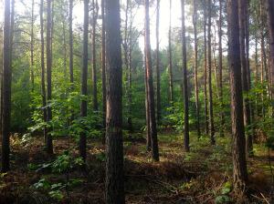 Polish woodland © Jason Hewitt