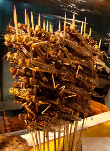 Skewered locusts on sale at a food stall in Beijing. Wikimedia Commons